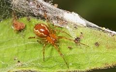인간보다 더 오래 사는 거미와 모기가 등장했다?