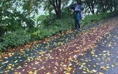 가을의 문턱, 시원하게 내리는 장대비