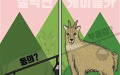 [만평] '산양 vs. 케이블카' 기로에 선 설악산 케이블카