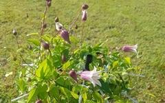 [사진] 일 년에 꽃을 두 번 피운다는 이것