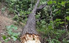 [모이] 쓰러진 나무들... 13호 태풍 '링링'이 남긴 상처