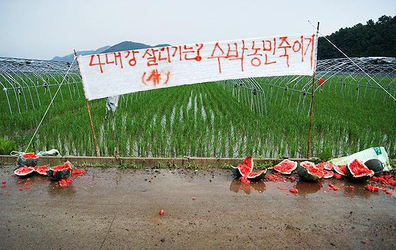 """'수박 신화' 창조한 농민들 """"이명박... 억울해서 잠도 안 와"""""""