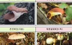 산행 중 발견한 버섯, '독버섯'일 수 있습니다
