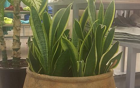 타이밍이 좋았다, 전무후무한 차떼기 식물