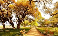 가을, 여행자를 매혹하는 '성주의 길'