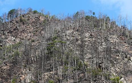 뒷산 나무들을 다 죽인 '죽음의 건물', 주민들도 위험하다