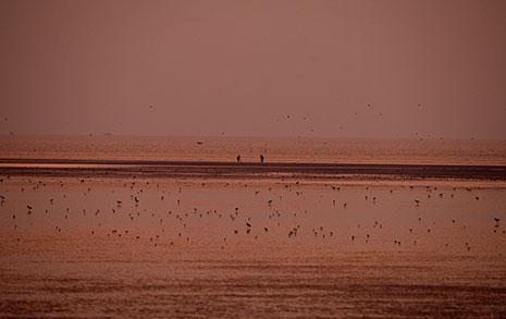 유네스코 세계자연유산 등재 도전하는 신안갯벌