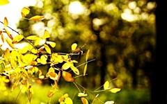 [사진] 가을색으로 물들어가는 '남산골한옥마을'