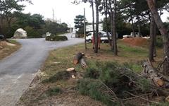 울산 동구서 50년된 소나무 수십그루 벌목, 누가 왜?