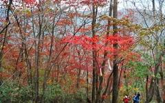 낙엽 밟는 소리... 이게 가을 등산의 매력이죠