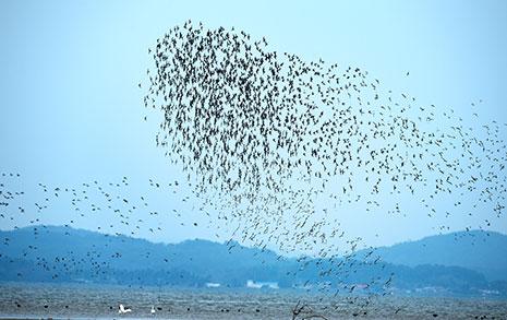 세계 철새들의 둥지 '신안갯벌'