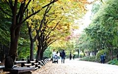 그윽하게 물든 서울... 가을도 이제 곧 떠나겠구나