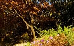 [사진 한 장] 계절을 잊은 채 피어난 철쭉