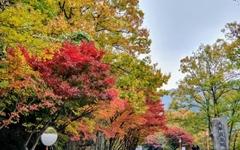 구례의 가을은 지금부터 시작이다