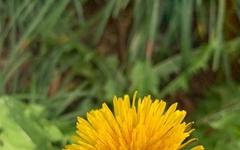 [모이] 겨울의 초입에 만난 다채로운 '노랑'들