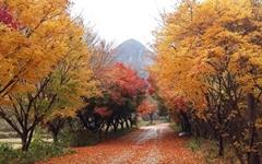 지는 가을에 읽으면 딱 좋은 시