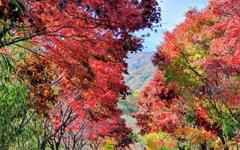 [사진] 구례, 가을빛으로 물들다