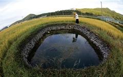 논 옆 물웅덩이 '둠벙', 국가중요농업유산 지정됐다