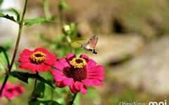 [사진] 이 친구는 벌새가 아닙니다