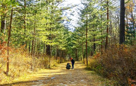 선택받은 사람만 갈 수 있는 소나무숲