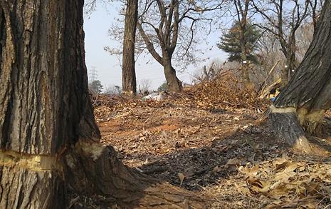 나무를 죽이는 다양한 방법... 숲 살해자는 누구?
