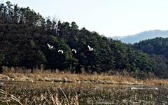 [사진] 지금 양수리에 가면 볼 수 있는 풍경