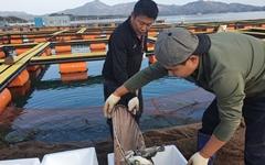 경남 고성 가두리양식장 '자주복', 일본 수출
