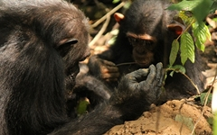 공유경제, 사람보다 침팬지가 빨랐다