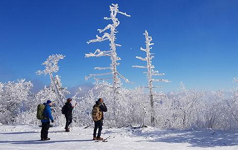 죽은 나무도 겨울이 되면 되살아나는 곳