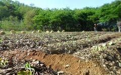 흙이 살아있으면 농사는 저절로 된다