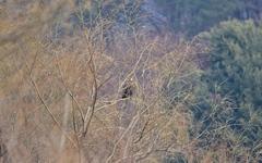 대전에서 월동중인 멸종위기종 이야기