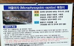멸종위기 1급 '여울마자' 방류해놓고 대규모 공사