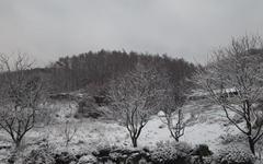 [사진] 겨울눈일까? 봄눈일까?