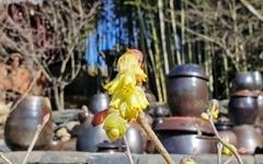 [사진] 히어리가 전하는 고택의 봄소식