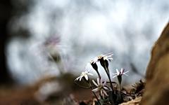 [사진] 대전 보문산에서 만난 야생화