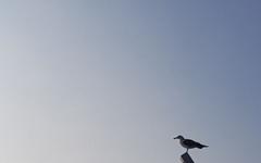 [사진] 반나절 나들이 안성맞춤, 소무의도 바다 누리길을 걷다