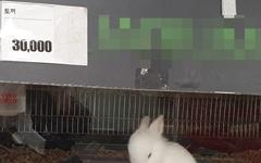 대형마트에서 파는 토끼는 3만 원
