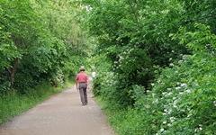 여의도 생태숲을 산책하며 만난 꽃들