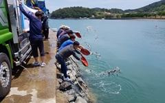 [남해] 3개 해역에 어린 돌돔 33만 마리 방류