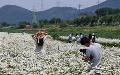 [사진] 주말 맞아 용장천 찾은 시민들... 농촌은 막바지 모내기 한창