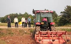 [서산] 마늘가격 폭락.... 농민들, 눈물 흘리며 마늘밭 갈아 엎어