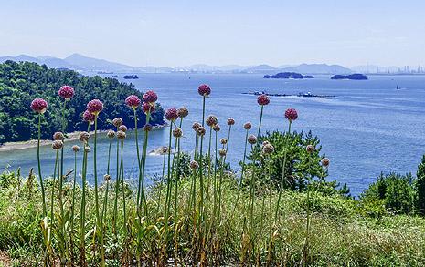 땀 뻘뻘 흘리며 걸어도 좋다, 푸르른 보물섬