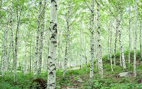 코로나 시대 여행, 흩어져라... 거기 숲이 있을지니