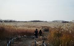 [사진] 상암동 하늘공원의 가을 풍경