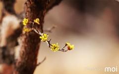 [모이] 봄은 노랑이다