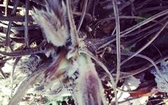 [사진] 봄물 밀려오는 소리 들리나요?