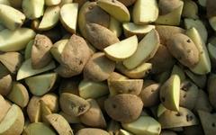 가뭄에 대비한 감자의 생존 전략