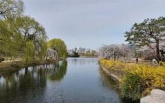 고양시 일산 호수공원의 봄
