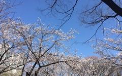 '엄마의 프로필 사진은 왜 꽃밭일까' 노래를 듣고