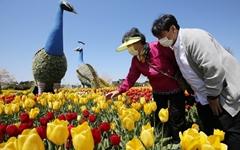 안면도꽃박람회의 감흥을 그대로… 코로나우울 달래는 100여종 튤립 '활짝'